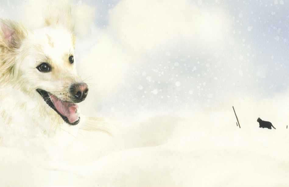 Possentini, Fiori di neve, libro illustrato per bambini di Natale, Le rane Interlinea